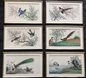 6 Big Antique Chinese Watercolor Paintings On Rice Pith Paper Qing Dynasty 1800