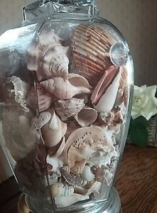 Fab Mid Century Vintage Table Lamp Filled With Seashells Glass Brass Nautical