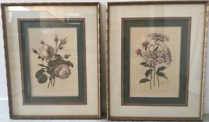 Pair 19th C Botanicals Antique French Mat Framed Under Glass Gilt Wood