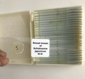 Students Study Medical Parasitology Slides Parasite Prepared Microscope Slides