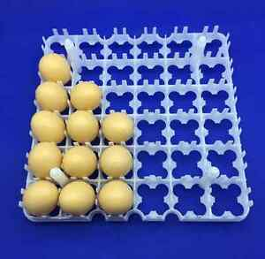 4 Pcs 36 144 Egg Tray 28 28 2 8 Cm Incubation And Transportation