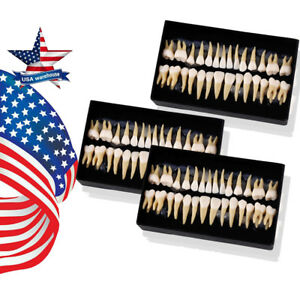 3kits Dental 1 1 Permanent Teeth Model Demonstration Teach Study 7008 28pcs kit