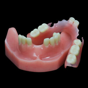 Dental Flexible Partial Lower Denture Model For Practice Pink