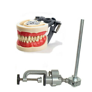Dental Typodont 200 And Pole Mount Compatible W Kilgore Nissin Brand Teeth