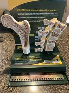 Anatomical Hip Lumbar Spine Models With Manual Fosamax Plus D New In Box