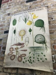 Vintage Botanical Laboratory School Wall Chart Insectivorous Plants C 1950 S
