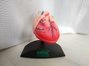 Anatomical 2 part Heart Model On Stand Vintage 1997 Advertising Norvasc Pharma