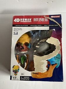 Colored 1 2 Didactic Exploded Human Skull Model Medical Skeleton Anatomy 4d