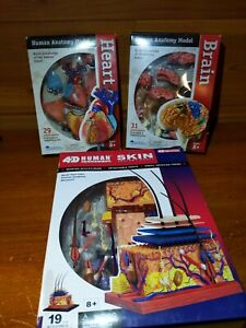 4d Master Human Anatomy Lot Heart Brain Skin Model With Stands Boxes Complete