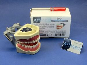 Dental Typodont Model 860 With Universal Plate Artmed
