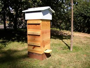 Bee Hive Warre Honey Bee Beehives Beeologique