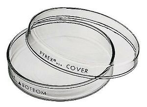 Pyrex 3160 60 Brand 3160 Petri Dish 60 X 15 Mm Pack Of 12