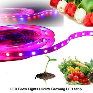 5m Led Strip Plant Grow Light Hydroponic Aquarium Lamp Red Blue 3 1 Dc 12v 5050