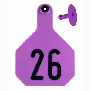 Y tex Large 4 star Tags Adult Cattle Fade Tear Resistent 26 50 Purple 25ct Pkg
