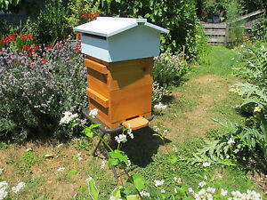 Bee Hive Warre Honey Bee Beehives