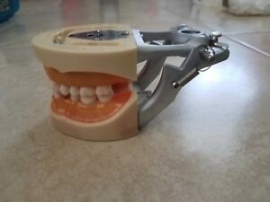 Kilgore Nissin Dental Typodont Model With 32 Extra Teeth