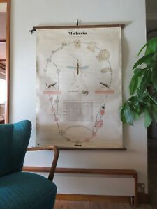 Vintage Pull Down Roll Down School Wall Chart Of Tertian Malaria Cycle Medical