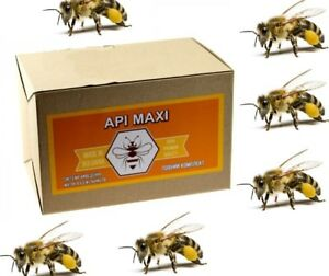 Queen Rearing Api maxi 20 System Output Queen Bees Set Bee