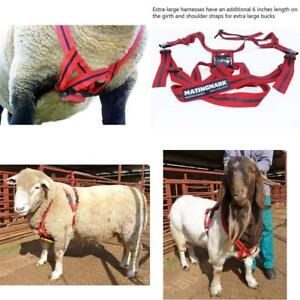 Matingmark Deluxe Ram Marking Harness For Monitoring Breeding Sheep Goats B