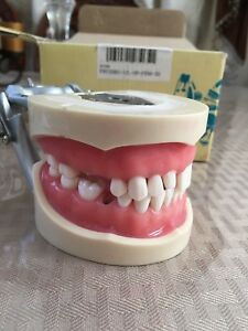 Kilgore Nissin Dental Model Typodont