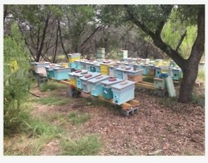2019 Honey Bee Colony