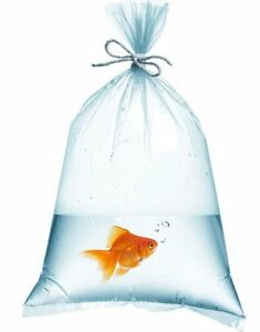 1000 Pack Plastic Fish Bags 12 X 18 Clear Polyethylene Bags For Shipping 2 Mil