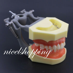 1 Pcs Dental Typodont Model 200 With Removable Teeth Kilgore Nissin Type Model