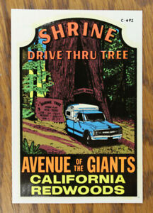 Rare Original Vintage Drive Thru Tree Travel Decal C10 Chevy Pickup Truck Camper