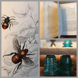 Antique Book Naturalist S Library 1843 Bees Jardine 21 Plates Honey Bee