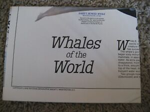 National Geographic Map The Great Whales Of The World 1976