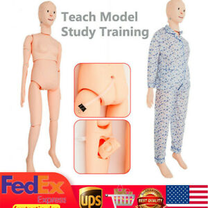 Human Woman Manikin Model Nursing Medical Patient Care Study Teaching Education