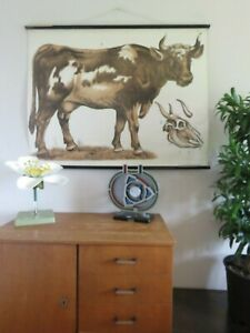 Vintage Cow School Chart Educational Wall Chart Antique Lithograph 1905 Cattle