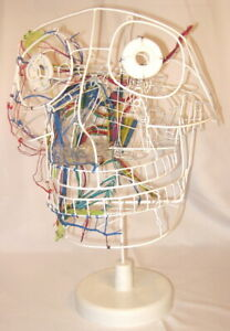 Autonomic Nervous Head Wire Sculpture Anatomical Teaching Medical Model New