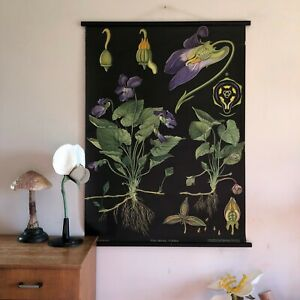 Vintage Rare Violet School Chart Jung Koch Quentell Botanical 1950 Wall Hanging