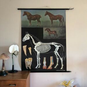 Vintage Horses School Chart By Jung Koch Quentell Poster Equine Anatomy 1972