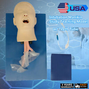 Airway Management Endotracheal Intubation Manikin Training Teaching Model Tube