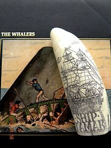 Scrimshaw Sperm Whale Tooth Resin Replica The Ship Tamar 6 1 2 Inches Long