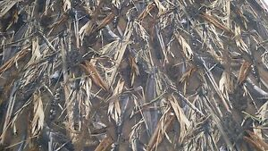 108 In Drt Duck Blind True Timber Auto Headliner Camo Fabric 3 16 Foam Backing