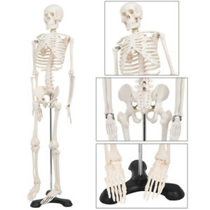 New Mini Size Advanced Human Anatomical Skeleton Model Stand Bone Number Kit
