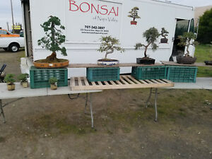 Retail Bonsai Business 4 Sale Napa 300 Trees Complete Training Included