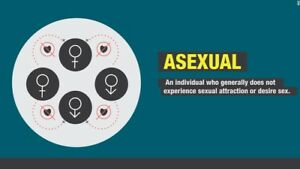asexual co Premium One word Dictionary Domain