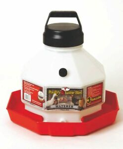 Poultry Fountain Waterer