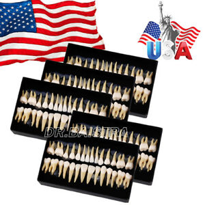 Us Stock 5x Dental 1 1 Permanent Teeth Demonstration Teach Study 28pcs kit 7008