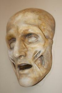 Death Mask Human Skull Plaque Medical Anatomical Face Anatomy Oddity Gothic