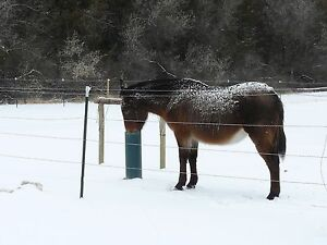 Horse Cattle Waterer The Watering Post Frost Proof Simple Sanitary 78 Inch