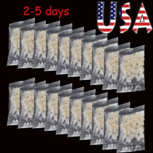20x Dental Temporary Crown Film Piece Porcelain Anterior Front Teeth Covering Ce