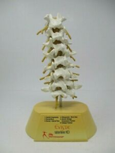 The Lilly Osteoporosis Spine Model With User s Guide