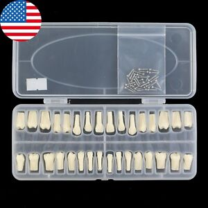 Usa Dental Replacement 32pc Teeth Model Typodont Screw in Frasaco Ag3 Compatible