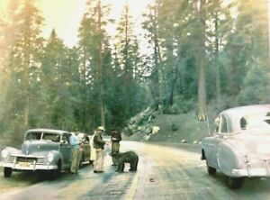 1946 Hudson And A Bear Card 7 x5 1950 Chevrolet National Park Commodore 6 8 47