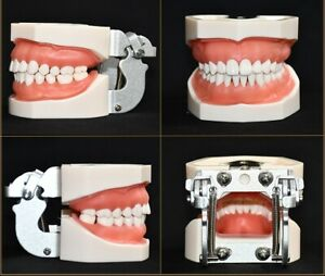 Dental Study Teaching Teeth Model Caries Tooth Model Analysis Tooth Models 28 32